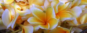 花ヘッダー画像